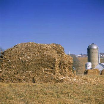 Biomasa: algunas conclusiones (I)